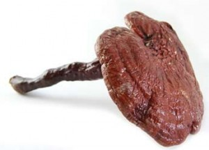 Le reishi bio, tonique, antioxydant naturel et protecteur hépatique